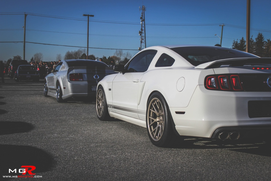 Ford Mustangs 02